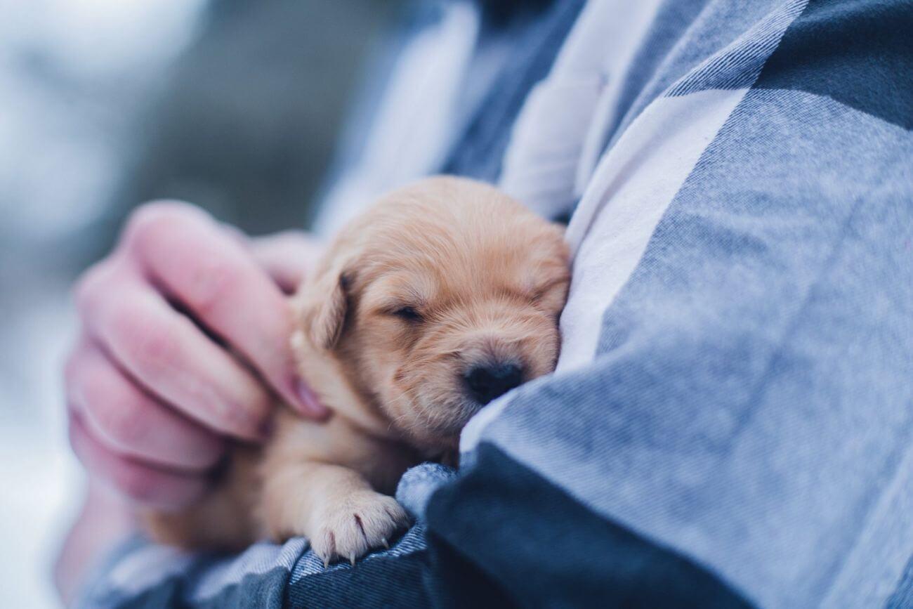 Socialización, la clave para la salud mental de tu perro