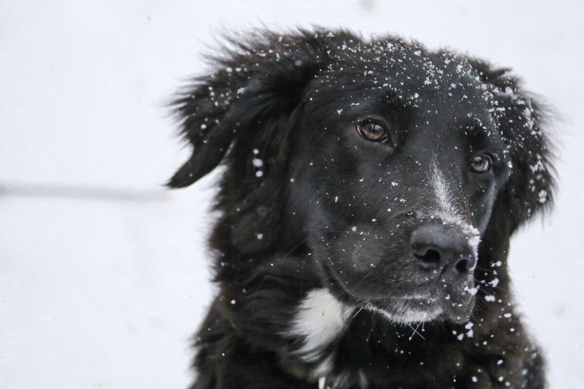 12 cosas que tu perro necesita para ser feliz