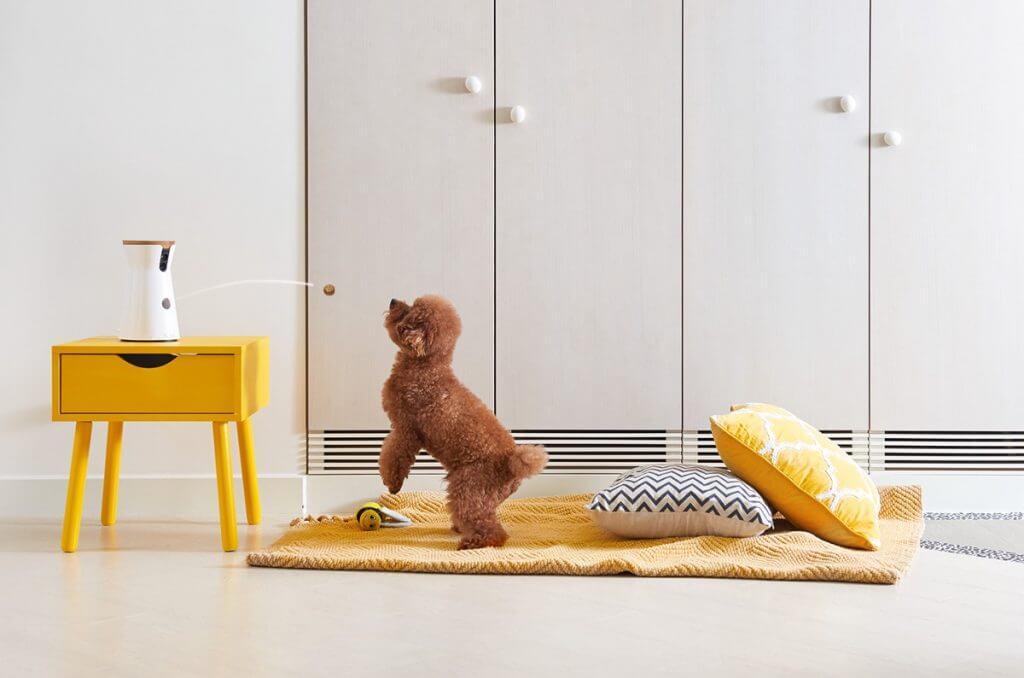 Cámaras de vigilancia para perros – cuida de tu perro mientras estás fuera
