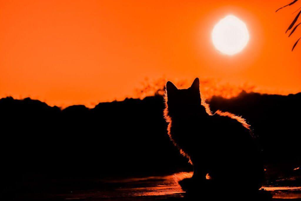 gato sin nombre