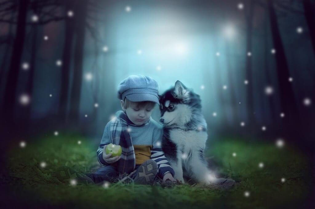 perro husky siberiano niños