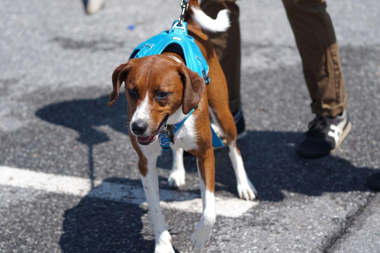 Cómo pasear a un perro ansioso y no morir en el intento