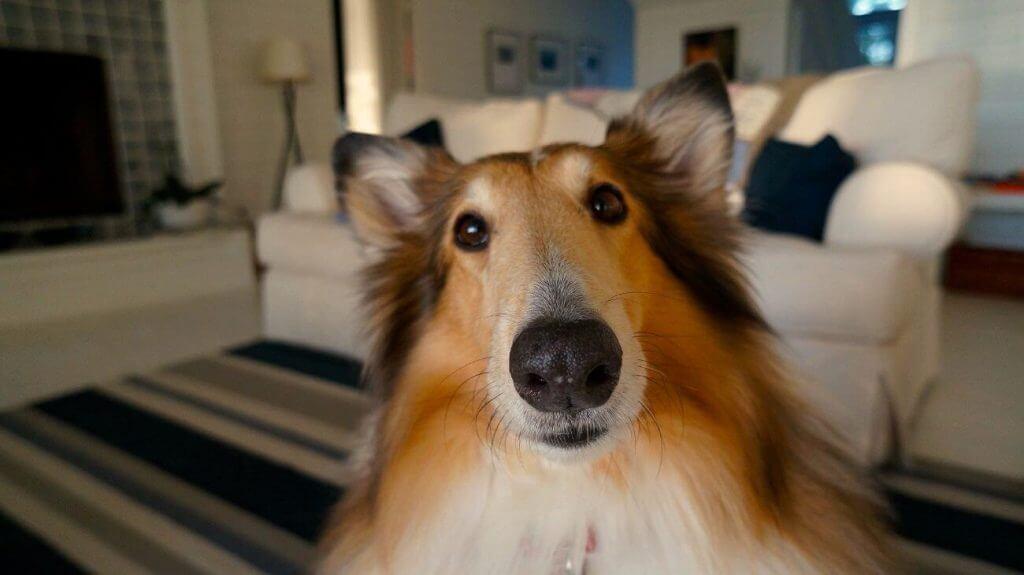 como saludan los perros
