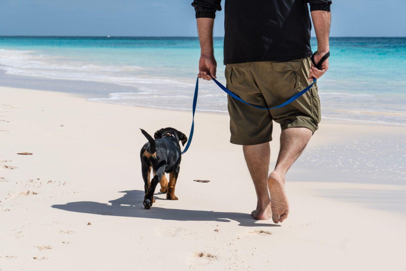Cómo pasear a un perro tranquilo