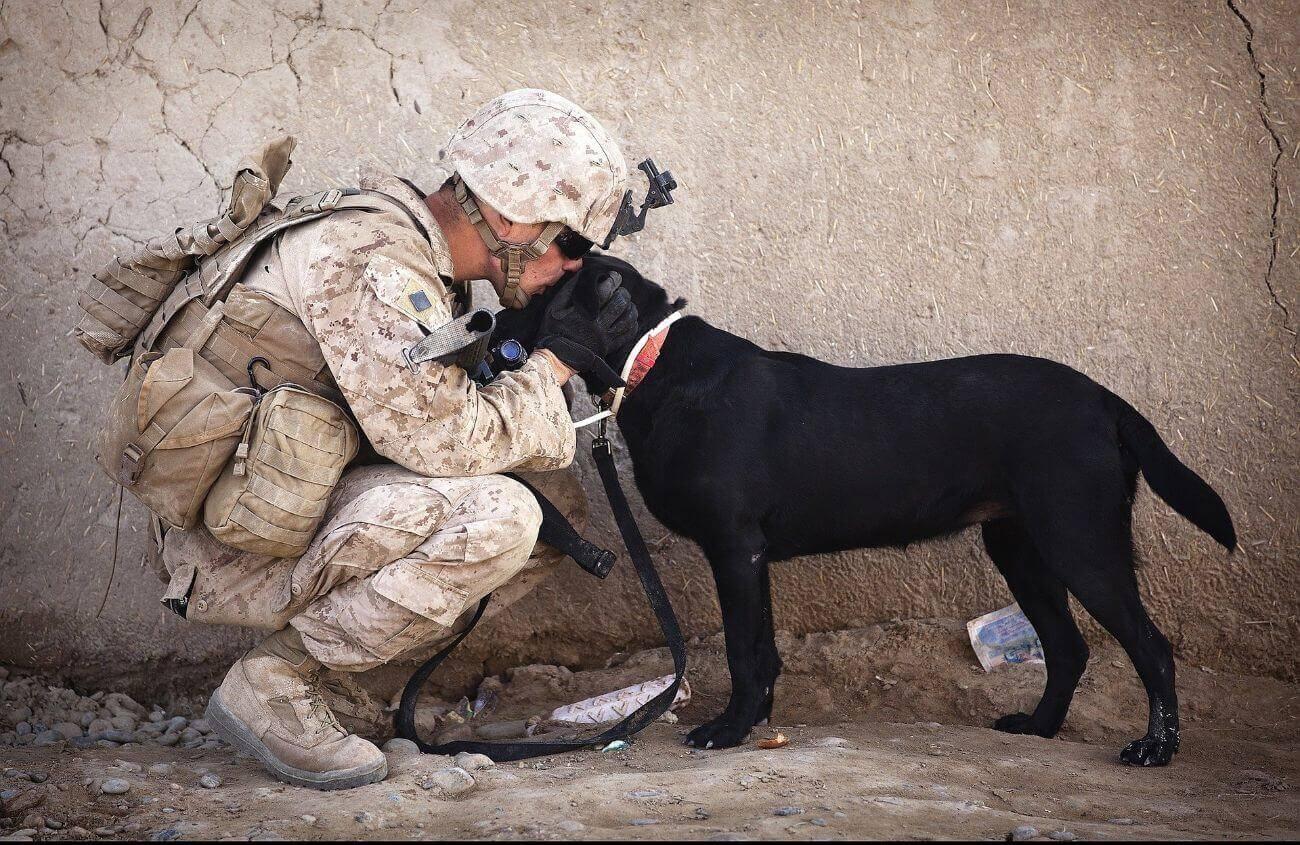 Un perro siempre se alegrará de verte