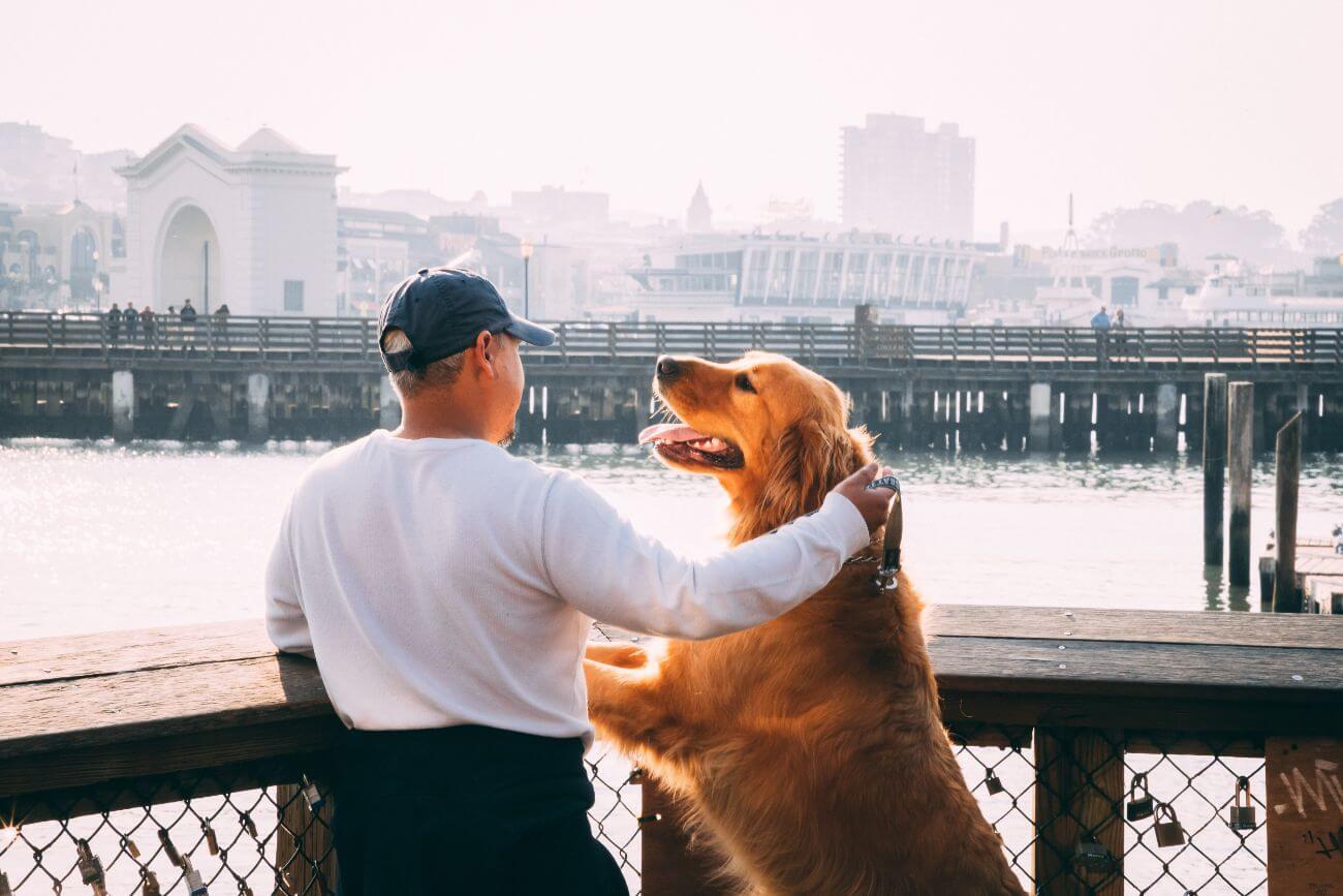 Los 7 beneficios de tener un perro en casa