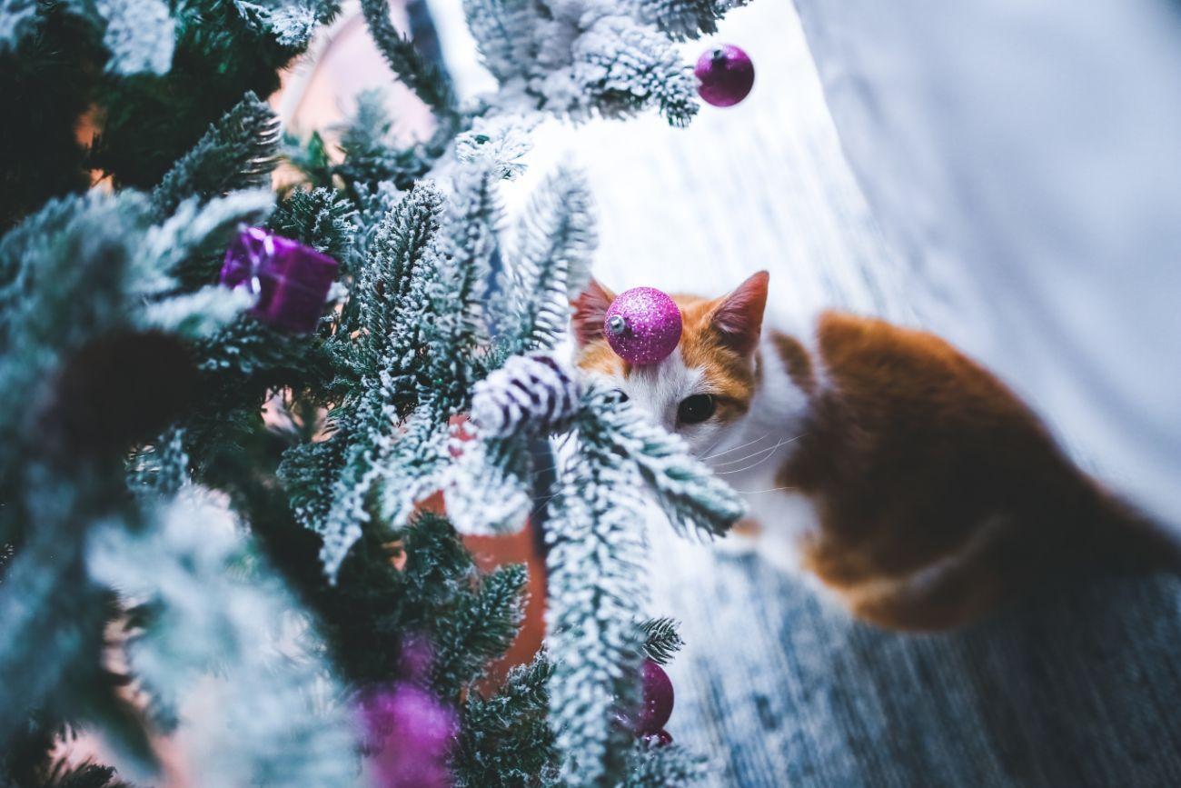 Plantas de Navidad tóxicas para gatos y perros