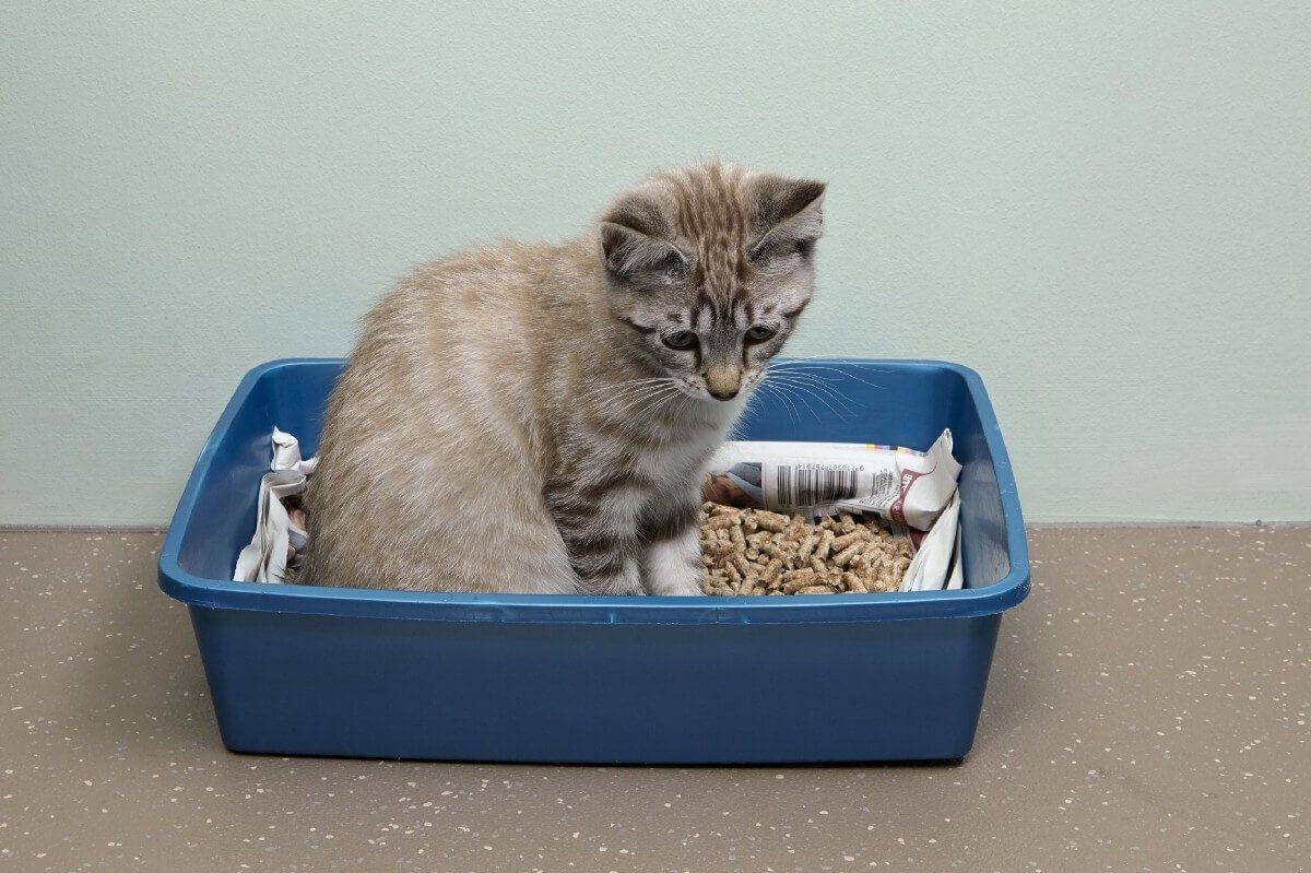 Cómo hacerle usar la caja de arena a tu gato