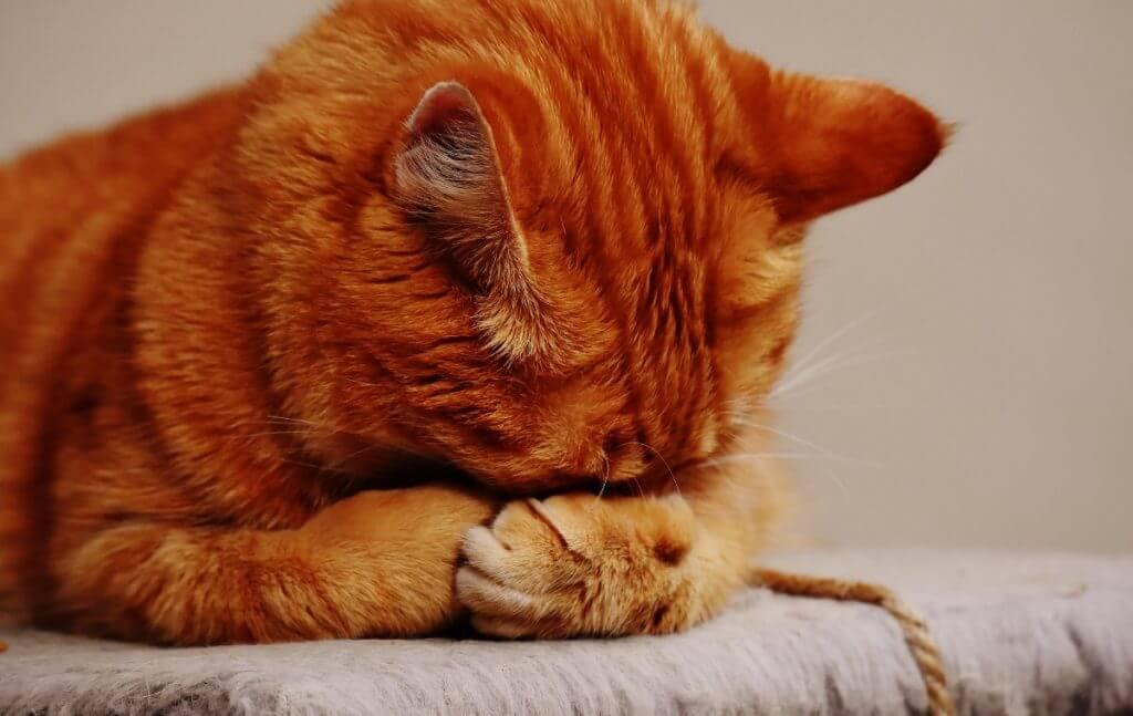 Elimina el miedo en tu gato para siempre