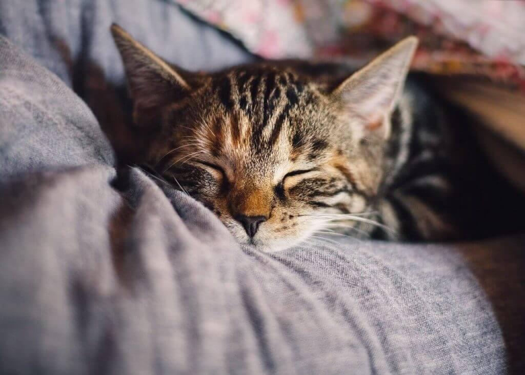 cama cueva para gatos