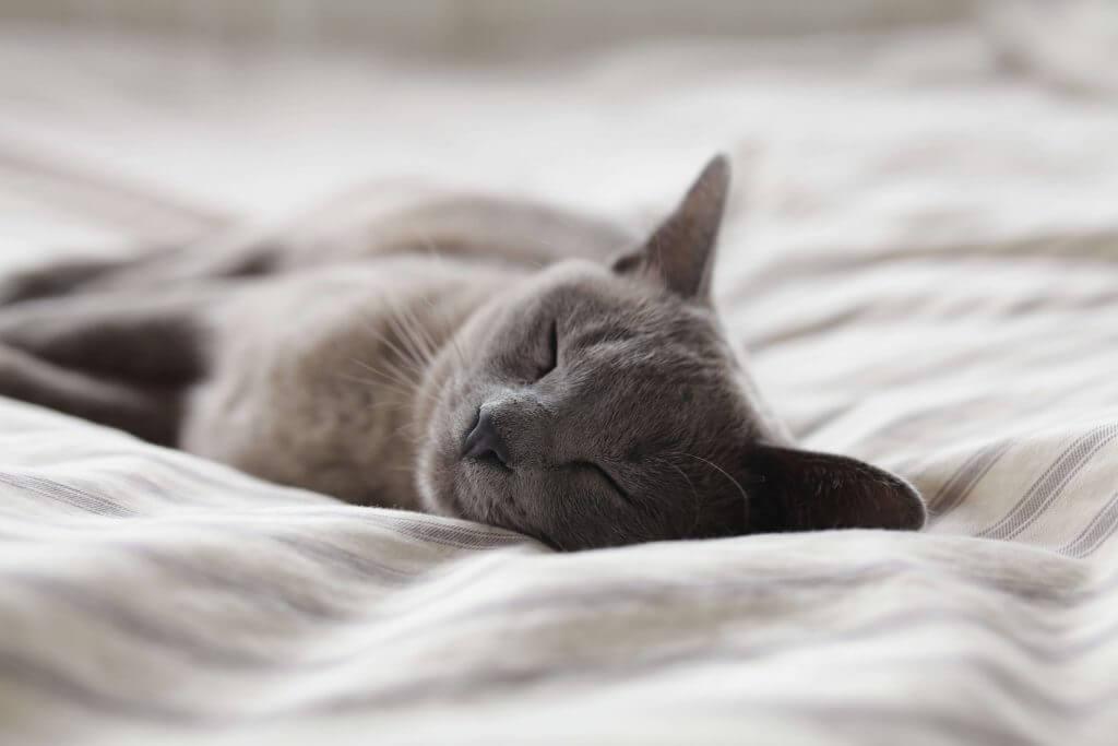 gato dormido en su cama petkit