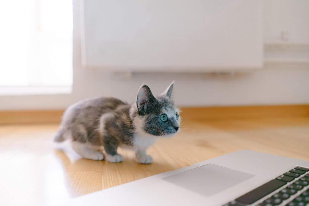 gatito tecnologia