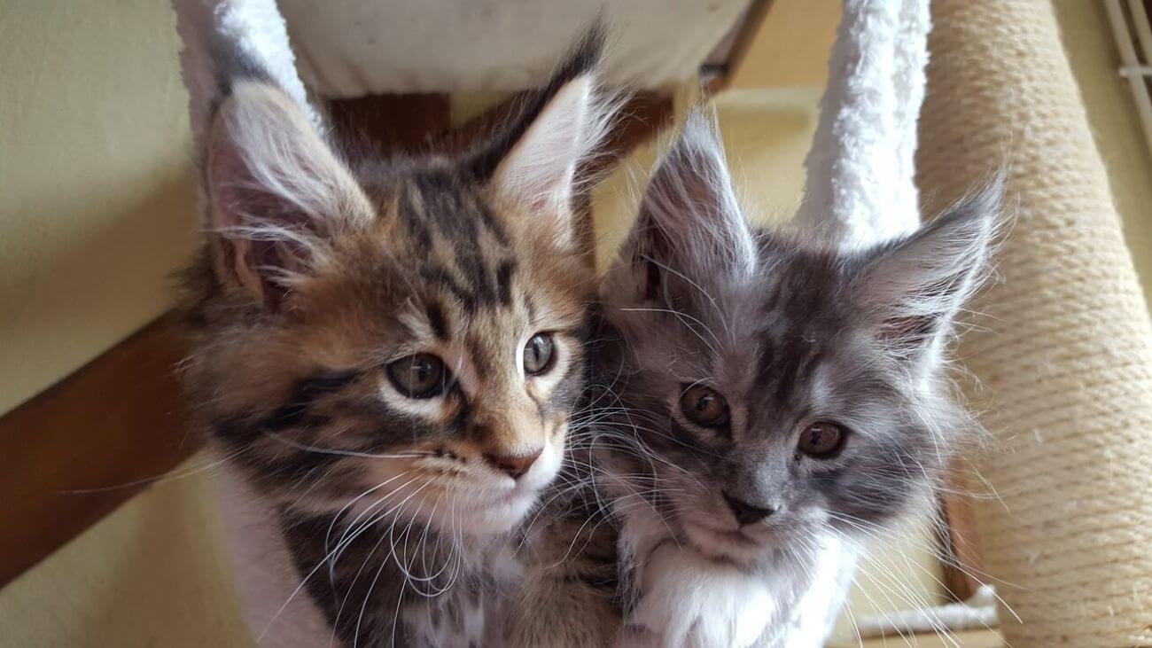 ¿Cuál es el nombre ideal para un gato?
