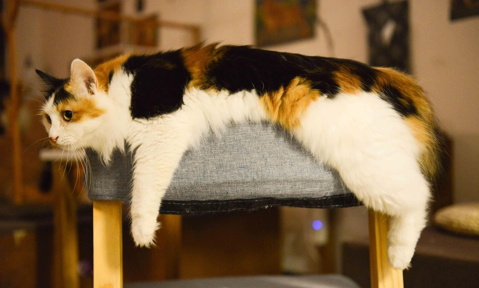 Dejar a un gato solo: Todo lo que debes saber