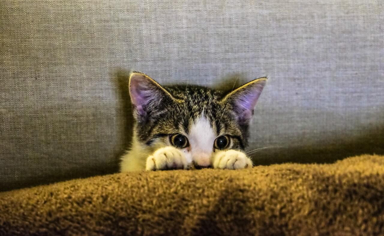 dejar a un gato a solas en casa