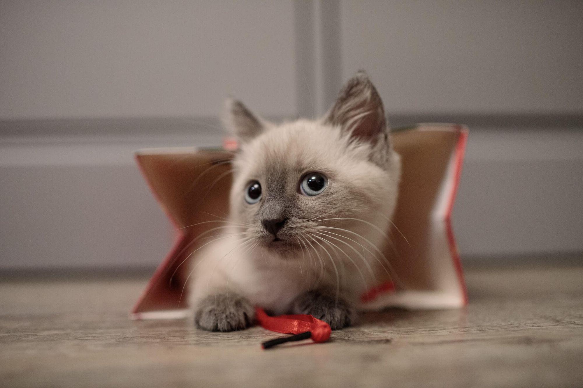 gato recien adoptado