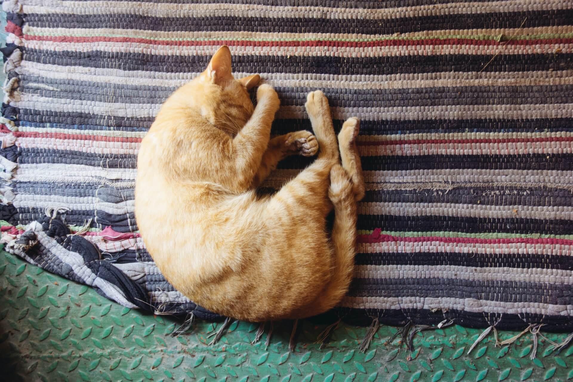 Cómo acostumbrar a un gato a una nueva casa