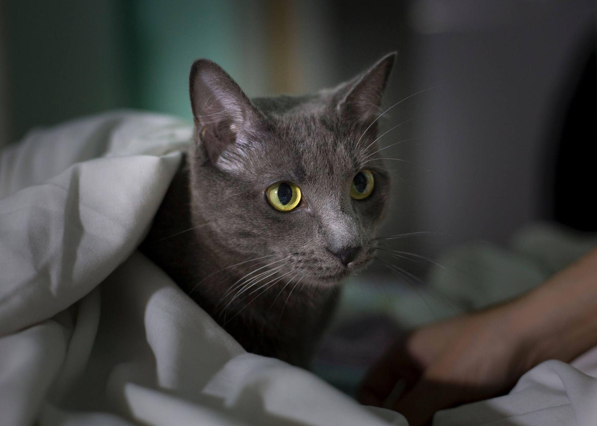 como acostumbrar a un gato a una nueva casa